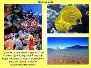 Красное море Одно из самых теплых (до +32С) и солёных (38-42‰) морей мира. В