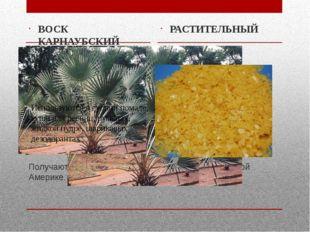 Получают из вееролистных пальм, растущих в Южной Америке. ВОСК КАРНАУБСКИЙ РА