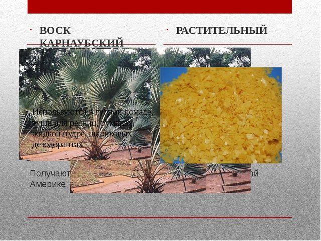 Получают из вееролистных пальм, растущих в Южной Америке. ВОСК КАРНАУБСКИЙ РА...