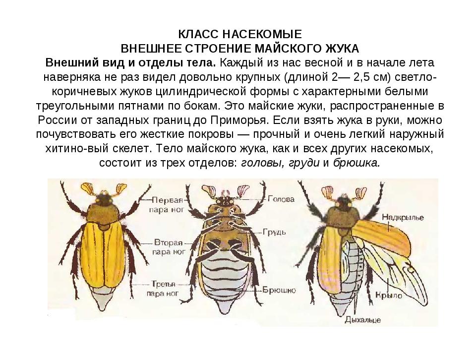 решебник по биологии 8 класс лабораторная работа на темумайски жук