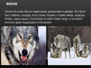 волки Питаются волки обычно животными: домашними и дикими. Это могут быть каб