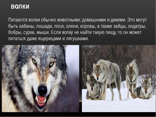 волки Питаются волки обычно животными: домашними и дикими. Это могут быть каб...