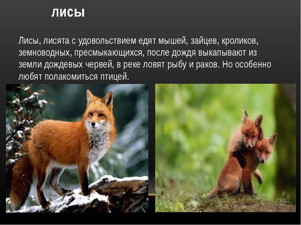лисы Лисы, лисята с удовольствием едят мышей, зайцев, кроликов, земноводных,...