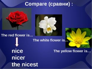 Compare (сравни) : The red flower is… The white flower is… The yellow flower