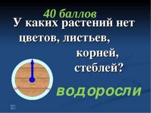 У каких растений нет цветов, листьев, корней, стеблей? 40 баллов водоросли