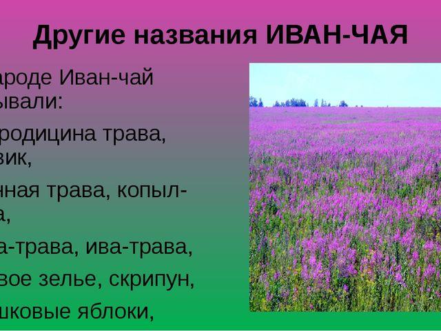 Другие названия ИВАН-ЧАЯ В народе Иван-чай называли: богородицина трава, пухо...
