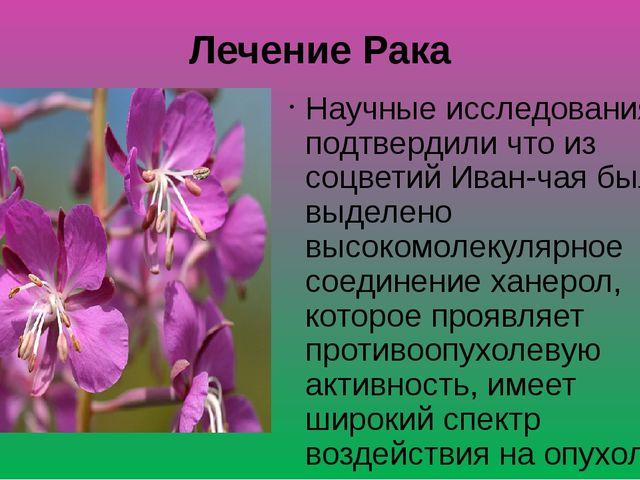 Лечение Рака Научные исследования подтвердили что из соцветий Иван-чая было в...