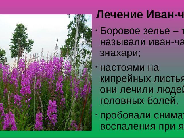 Лечение Иван-чаем Боровое зелье – так называли иван-чай знахари; настоями на...