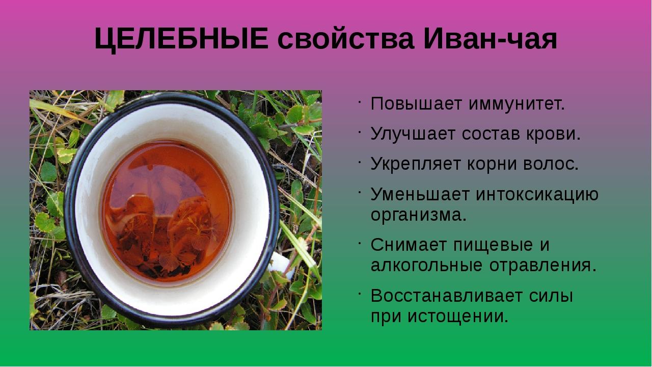 ЦЕЛЕБНЫЕ свойства Иван-чая Повышает иммунитет. Улучшает состав крови. Укрепля...