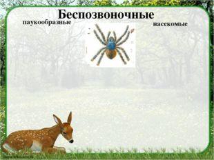 Беспозвоночные паукообразные насекомые