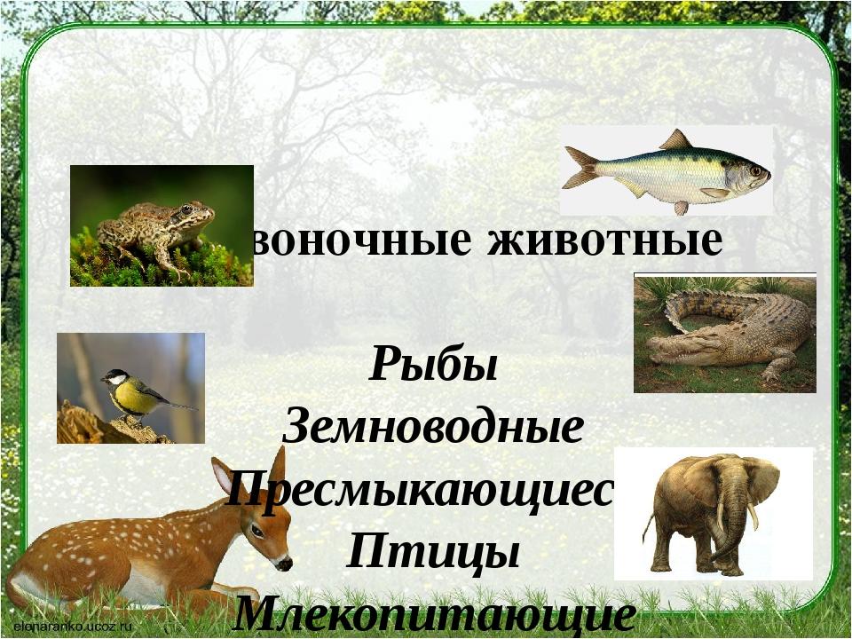 Позвоночные животные Рыбы Земноводные Пресмыкающиеся Птицы Млекопитающие