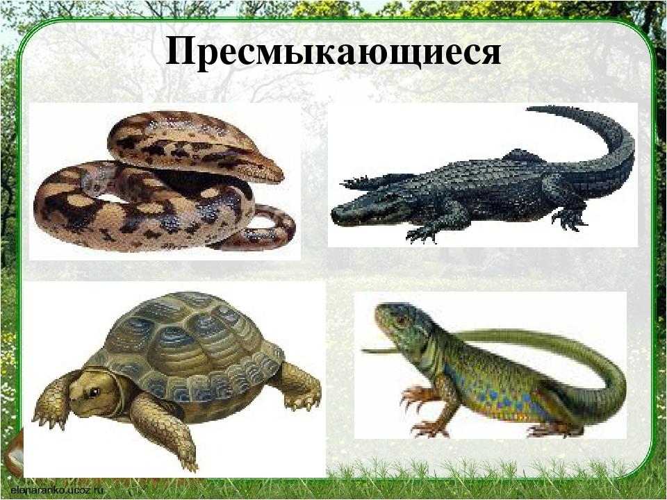 рептилии названия с картинками выгрузке