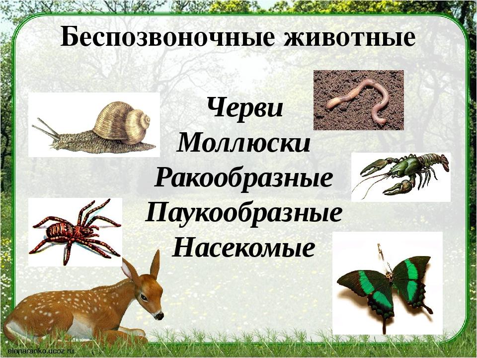 Беспозвоночные животные Черви Моллюски Ракообразные Паукообразные Насекомые