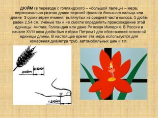ДЮЙМ (в переводе с голландского – «большой палец») – мера, первоначально равн