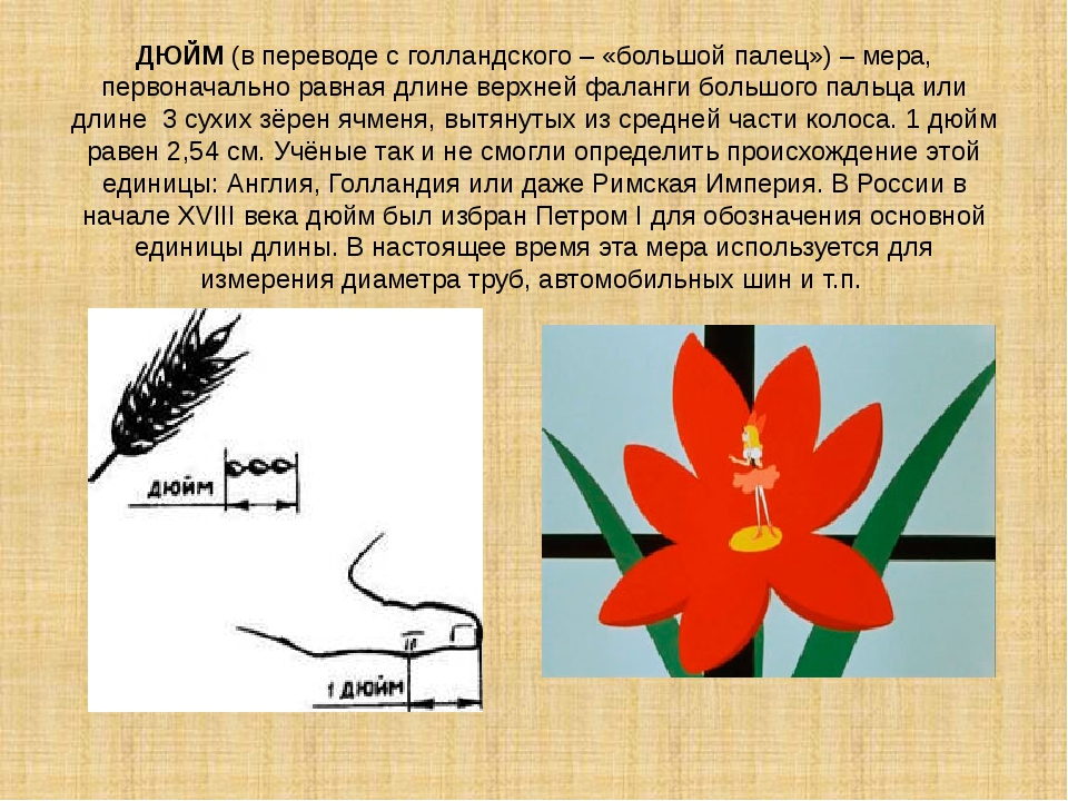 ДЮЙМ (в переводе с голландского – «большой палец») – мера, первоначально равн...