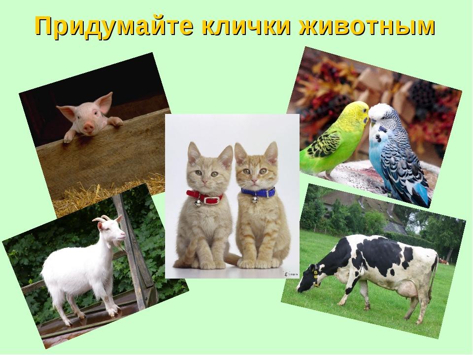Придумайте клички животным