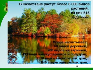 В Казахстане растут более 6 000 видов растений, из них 515 эндемики. Флора на
