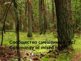 Сообщество смешанный лес/ Community of mixed forest.