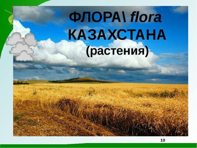 ФЛОРА\ flora КАЗАХСТАНА (растения) 10