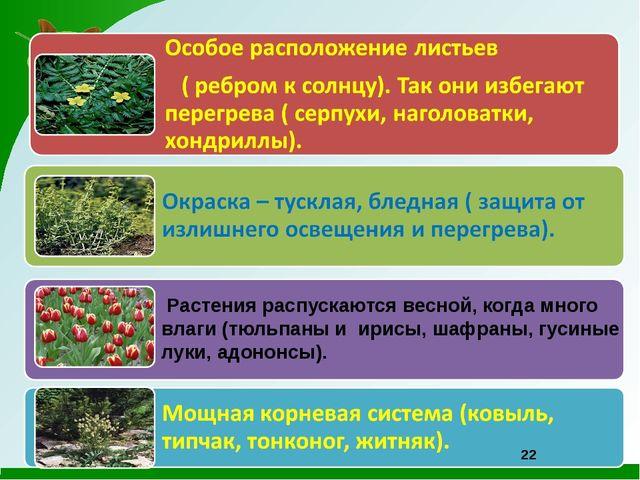 Растения распускаются весной, когда много влаги (тюльпаны и ирисы, шафраны,...