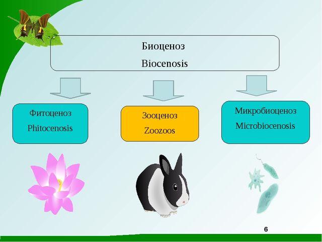 6 Микробиоценоз Microbiocenosis Зооценоз Zoozoos Фитоценоз Phitocenosis Биоце...