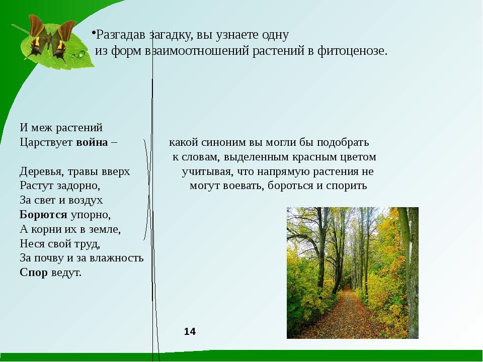 Разгадав загадку, вы узнаете одну из форм взаимоотношений растений в фитоцено...