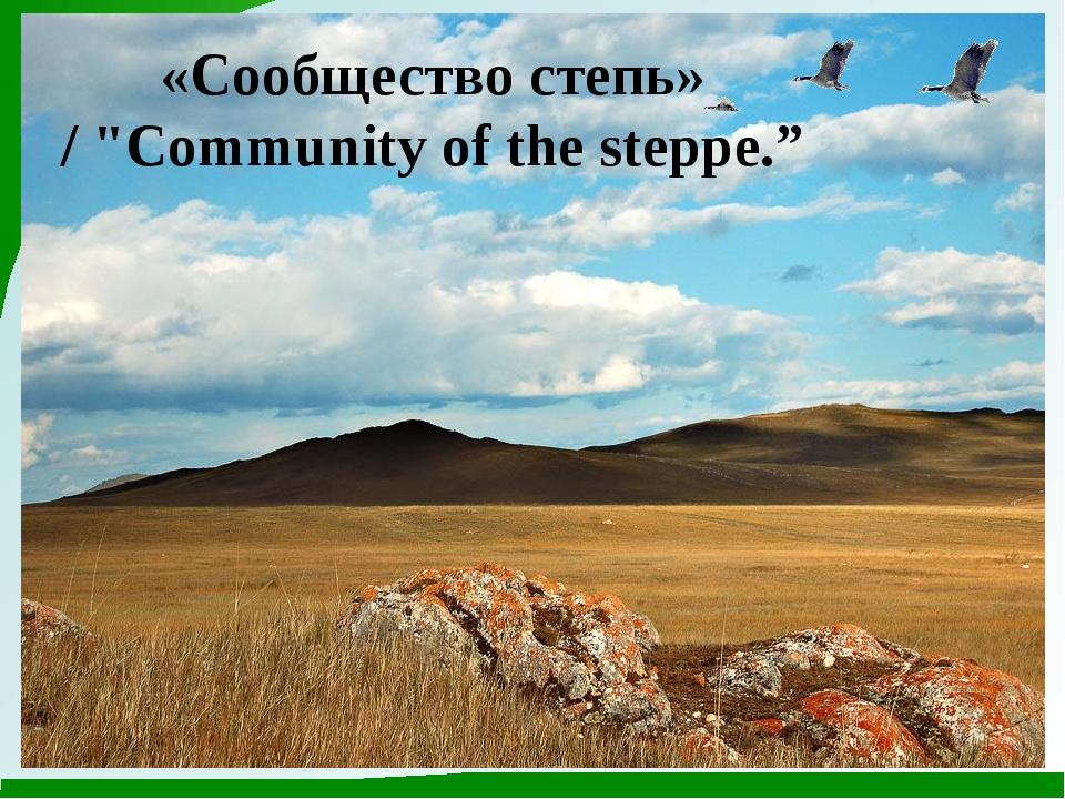 """«Сообщество степь» / """"Community of the steppe."""""""