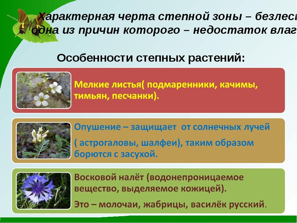 Характерная черта степной зоны – безлесье, одна из причин которого – недоста...