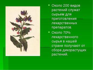 Около 200 видов растений служат сырьем для приготовления лекарственных препар