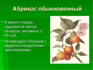 Абрикос обыкновенный В мякоти плодов содержатся пектин, сахарозы, витамины С,