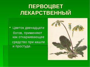 ПЕРВОЦВЕТ ЛЕКАРСТВЕННЫЙ Цветок двенадцати богов, применяют как отхаркивающее