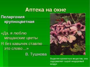 Аптека на окне Пеларгония крупноцветная «Да, я люблю мещанские цветы Я без ка