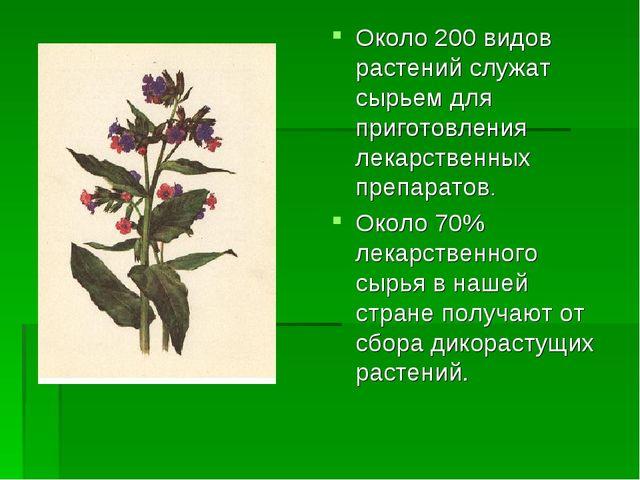 Около 200 видов растений служат сырьем для приготовления лекарственных препар...