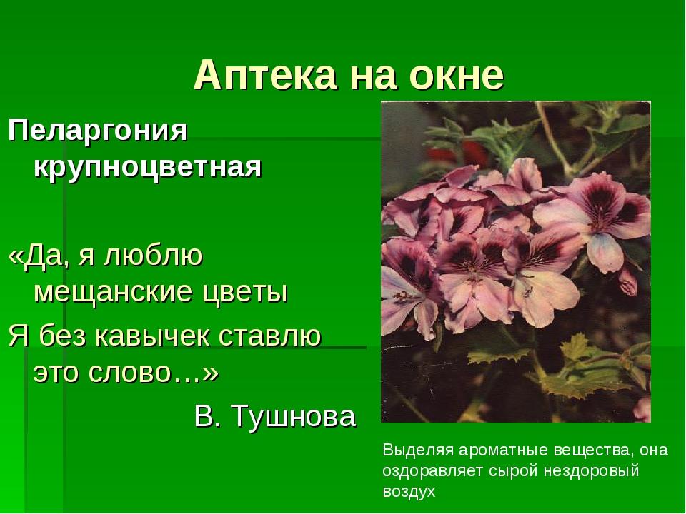 Аптека на окне Пеларгония крупноцветная «Да, я люблю мещанские цветы Я без ка...