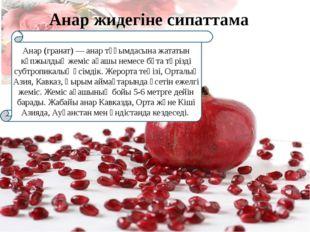 Анар (гранат) — анар тұқымдасына жататын көпжылдық жеміс ағашы немесе бұта т