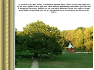 The typical landscape of the territory of the Belgorod region has always been