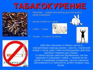 ТАБАКОКУРЕНИЕ Никотин – самый опасный яд растительного происхождения. Кролик