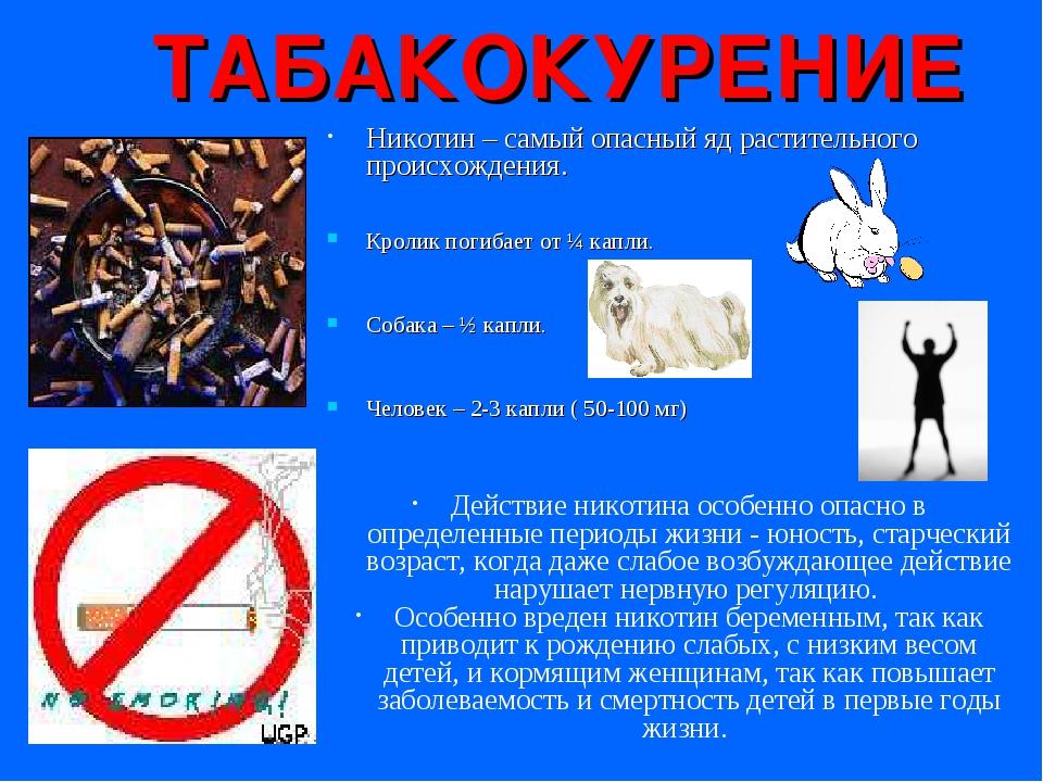 ТАБАКОКУРЕНИЕ Никотин – самый опасный яд растительного происхождения. Кролик...