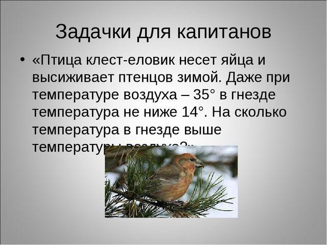 Задачки для капитанов «Птица клест-еловик несет яйца и высиживает птенцов зим...