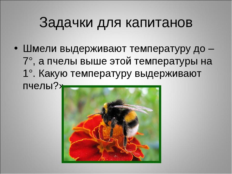 Задачки для капитанов Шмели выдерживают температуру до –7°, а пчелы выше этой...