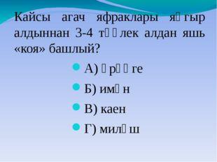 Кайсы агач яфраклары яңгыр алдыннан 3-4 тәүлек алдан яшь «коя» башлый? А) өрә