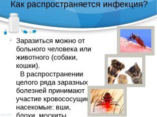 Как распространяется инфекция? Заразиться можно от больного человека или живо