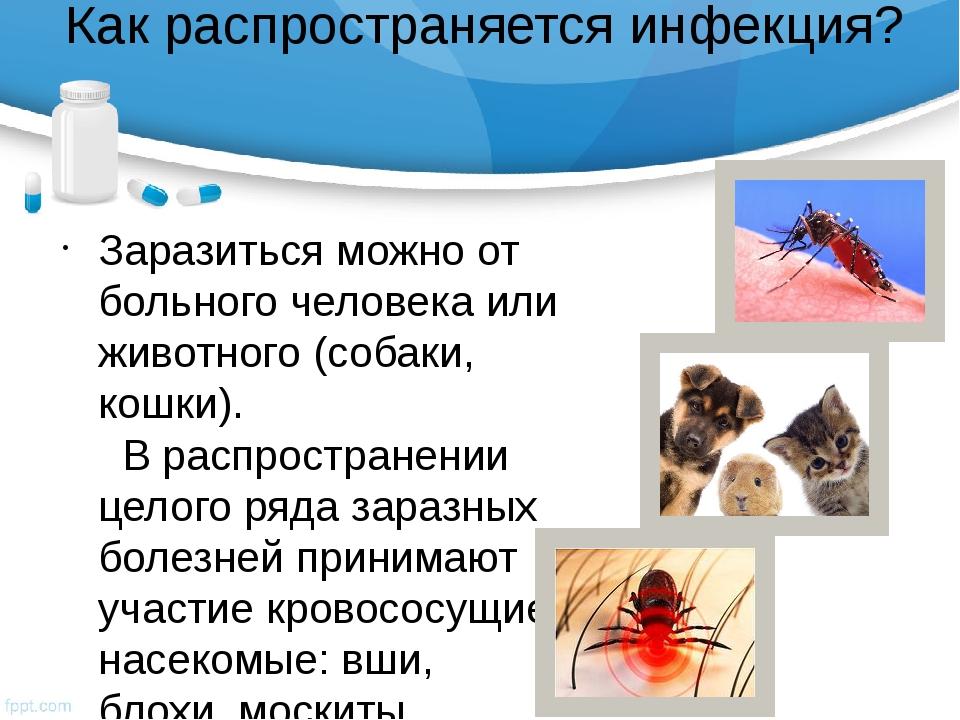 Как распространяется инфекция? Заразиться можно от больного человека или живо...