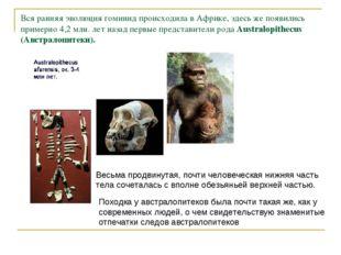 Вся ранняя эволюция гоминид происходила в Африке, здесь же появились примерно