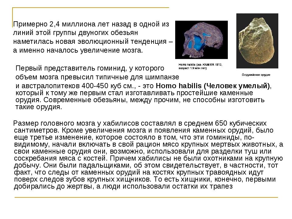 Размер головного мозга у хабилисов составлял в среднем 650 кубических сантим...