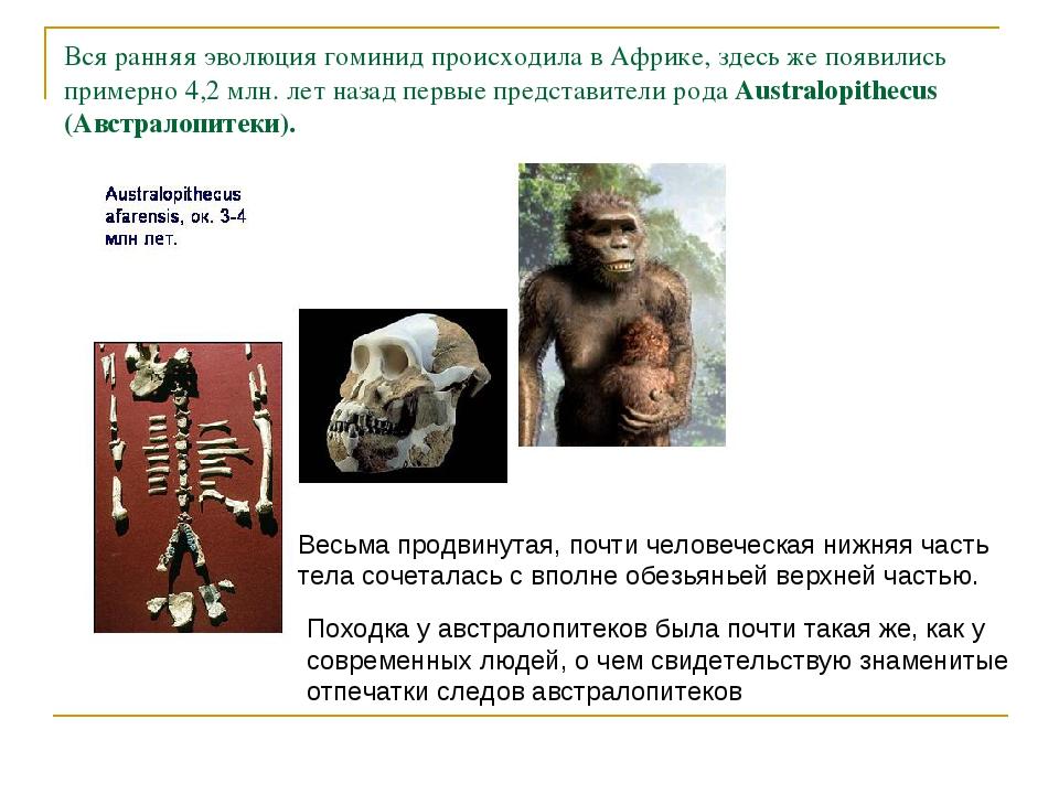 Вся ранняя эволюция гоминид происходила в Африке, здесь же появились примерно...