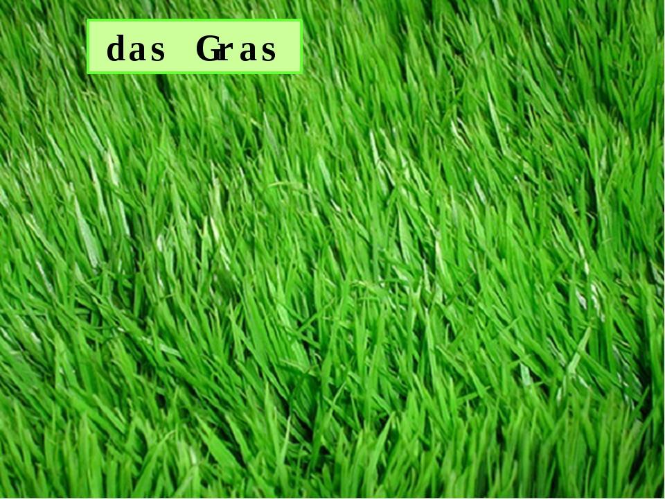 das Gras