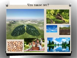 Что такое лес?
