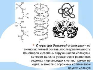 Структура белковой молекулы– ее аминокислотный состав, последовательность мо