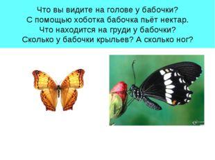 Что вы видите на голове у бабочки? С помощью хоботка бабочка пьёт нектар. Что